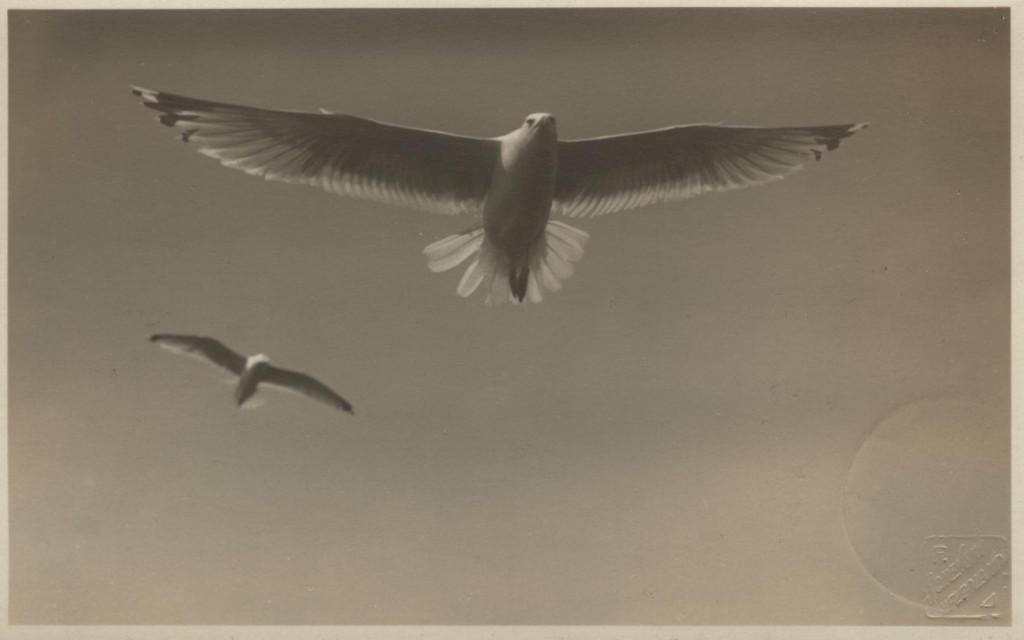 Postkarte mit einer Fotografie von Franz Schensky aus der Sammlung Stenger, 1931