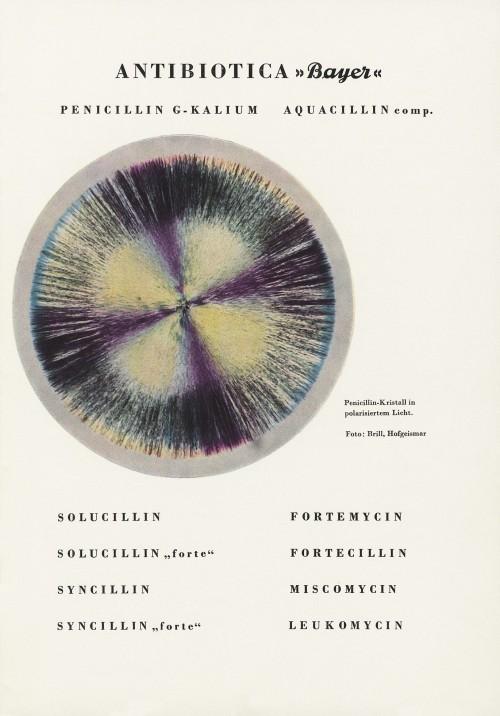 Mikroaufnahme Penicillin