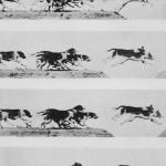 Springende Hunde