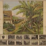 """Schulwandbild """"Die Banane"""", um 1925 Herausgeber: Leipziger Verlagshaus der Spamerschen Buchdruckerei / Sammlung MdA, Stiftung historische Museen Hamburg (SHMH) ©"""
